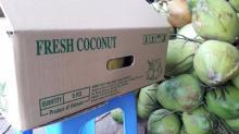 Fresh Brown Semi Husked Coconuts
