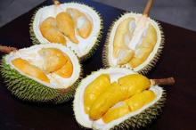 Fresh Durian from Brazil Premium Grade