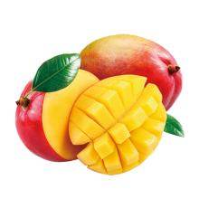Wholesale Fresh Mango India / Alphonso Mango Fruit / Mango Pulp