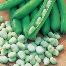 FROZEN FRESH BROAD BEANS FOR SALE