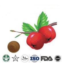hawthorn fruit powder Hawthorn fruit extract Hawthorn Flavones