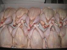 Wholesale frozen halal chicken