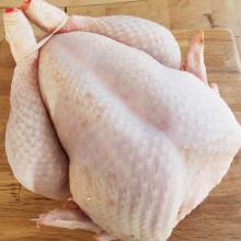 Grade A Brazilian Halal Frozen Whole Chicken, Chicken Parts