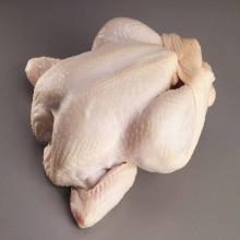 Grade A frozen whole chicken for sale