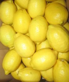Quality Fresh Yellow Lemon