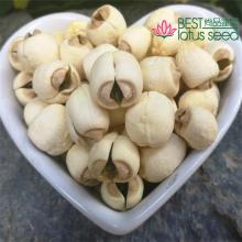 Dried Handmade Lotus Seed Nut Kernel with Core Plumele Lotus Extract Manufacture Wholesaler Supplier