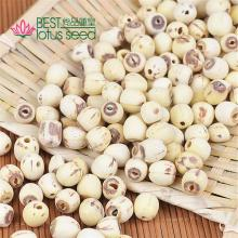Grinding  Lotus  Seed Nut Kernel without Core Plumele  Lotus   Extract  Manufacture Wholesaler Supplier