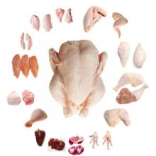 FROZEN WHOLE CHICKEN, FROZEN CHICKEN PAWS FROZEN PROCESSED CHICKEN FEET FOR WHOLESALES
