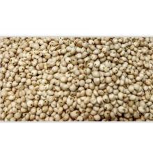100% Natural and Fresh White Sorghum Seeds