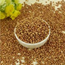 Roasted buckwheat for sale