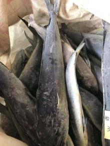 Seafrozen Mahi Mahi WR 1kg-, 1-2kg,2-3kg, 3-4kg/pc