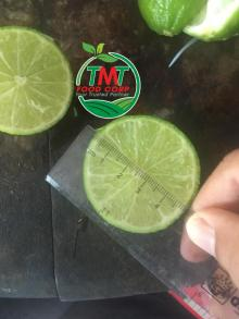 LIME AND SEEDLESS LIME