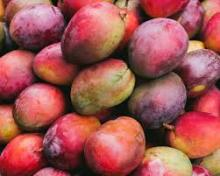 WHOLE SALE FRESH MANGO FOR SALE FROM GERMANY