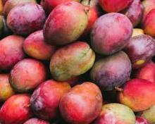 Quality Mango