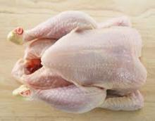 QUALITY HALAL WHOLE FROZEN CHICKEN AND CHICKEN PARTS