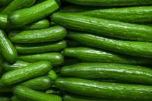 Offer For Fresh quality Cucumber