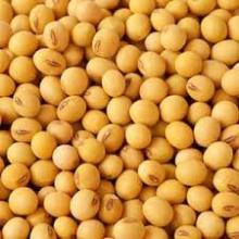 Best quality Soybeans