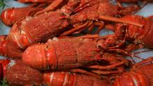 Best Quality Crayfish