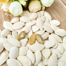 Roasted Snow White Pumpkin Seeds