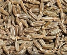 Cheap Cumin seed