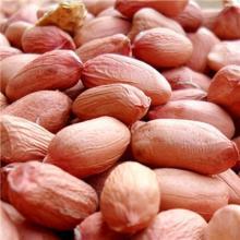 Red Skin Peanut Kernels