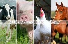 L-Tryptophan Feed Grade with Best Price