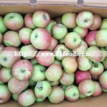 New Harvest Season for Jiguan Apple