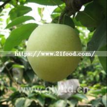 Chinese Fresh Green Emerald Pear