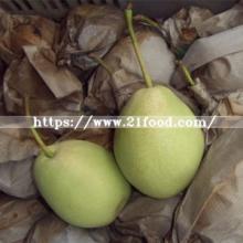 Medium  Size  Fresh Shandong Pear in 15kg  Carton