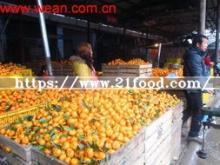 Small Baby Orange (3-5.5cm)