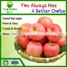 New Crop Fresh Apple Fresh FUJI Apple From China
