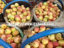 2015 New Crop Gala Apple
