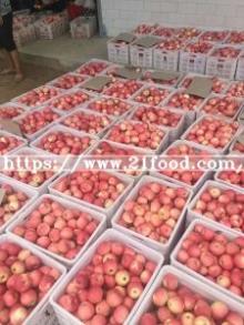 2018  New   Crop   Apple