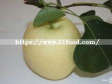 Chinese Fresh Sweet Snow Pear by New Crop 2018