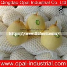 New Crop Fresh Chinese Ya Pear for Wholesale