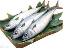 Horse Mackerel/jAPANESE Mackerel/Pacific Mackerel