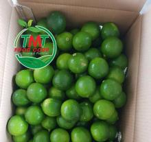 Best Quality Fresh Seedless Lime Originating From Vietnam