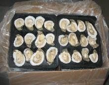 Fresh and Frozen Oysters