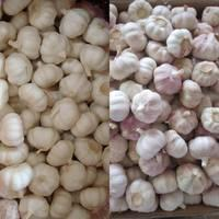 supplier supply wholesale export natural china product new crop fresh chinese purple violet color no