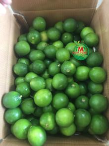 BEST PRICE SEEDLESS LIME FROM VIETNAM