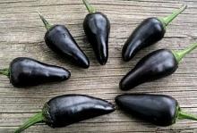 black Chilli pepper