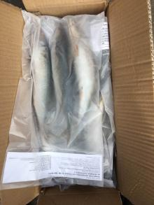 frozen pacific mackerel wr packed in 1kg rider bag