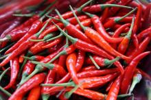 Red hot Chilli Pepper for sales.