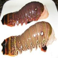 Frozen spiny lobster tails