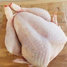 "Frozen Chicken Paws ""AA"" Grade. Halal Chicken Feet / Frozen Chicken Paws Brazil/Chicken"