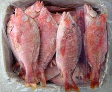 Frozen pompano fish ,Squid fin,Yellow clam ,Mackerel fish ,Basha fish for sale,