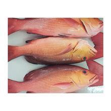 FROZEN POLLOCK FISH,BONITA FISH ,CABRILLA GROUPER ,SHEEPHEAD FISH, BASS FISH