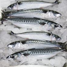 Frozen Grouper Fish Whole Round ,Frozen Mackerel fish, Frozen Tilapia fish and Sole fish for sale