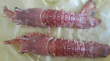 Fresh and Frozen Jonah crab,snow crab,crayfish,bay scallop for sale