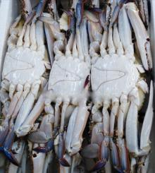 Lobster tail ,Cat tiger shrimp ,squid,Gold snail ,Squid fillet,Frozen shuttle crab for sale